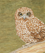 Katharine Green - The Boobook Owl