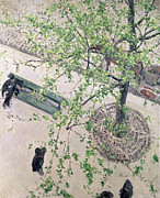 Foliage Paintings - The Boulevard Viewed from Above by Gustave Caillebotte