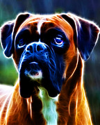 Cute Dogs Digital Art Prints - The Boxer - Electric Print by Wingsdomain Art and Photography