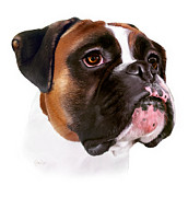 Brindle Digital Art Prints - The Boxer Print by Garry West