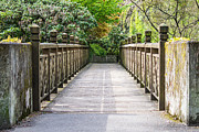 Azalea Bush Photo Prints - The Bridge To Spring Print by Priya Ghose