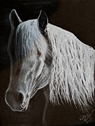 Wild Horse Drawings - The Brumby Ghost by Katie McKenna