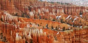 Naturelle Prints - The Bryce Canyon Series XV Print by Scott Cameron