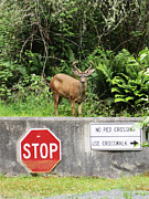 Crosswalk Photos - The Buck Stops Here by Kym Backland