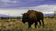 Claudette DeRossett - The Buffalo