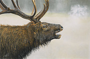 Terry Kirkland Cook - The Bull Elk