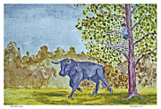 Hiding Mixed Media Prints - The Bull is Loose Print by Fred Jinkins
