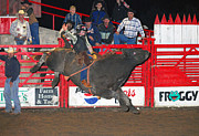 Bulls Metal Prints - The Bull Rider Metal Print by Larry Van Valkenburgh