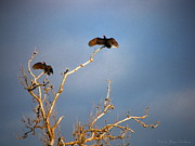 Joyce Dickens Metal Prints - The Buzzard Roost Metal Print by Joyce Dickens