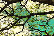 The Canopy Above Print by Cheryl Young