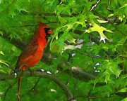 Red Birds Digital Art - The Cardinal 2 Painterly by Ernie Echols