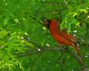 Red Birds Digital Art - The Cardinal Painterly by Ernie Echols