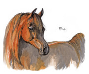 Horses Drawings - The Chestnut Arabian Horse 2a by Angel  Tarantella