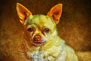 Indianapolis Art - The Chihuahua Story by David Haskett