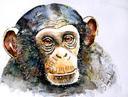 Steven Ponsford - The chimp