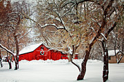 Christmas Card Photo Originals - The Christmas Barn by Teri Virbickis