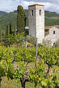 Chianti Vines Prints - The Church Vineyard Print by Adrian Alford