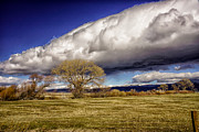 Janis Knight - The Clouds of Washoe...
