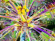 Husks Posters - The Coconut Tree Poster by Marilyn Holkham