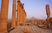 Palmyra Photos - The Colonnaded Street and Arab Castle at Palmyra Syria by Robert Preston