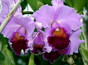 Wet Orchids Framed Prints - The Color of Orchids Framed Print by Warren M Gray