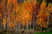 Andrea Kollo - The Colors of Autumn
