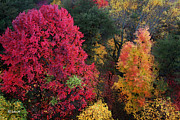 The Colors Of Fall Print by E B Schmidt