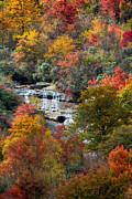 John Haldane - The Colors of Fall