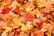 Fall Colors Photos - The Colors of Fall by Syed Aqueel
