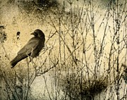 Crow Image Prints - The Common Crow Print by Gothicolors And Crows