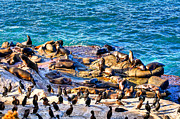 Cormorants Prints - The Community Print by Jim Carrell
