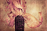 Eating Deco Posters - The corn on the cob Poster by Angela Doelling AD DESIGN Photo and PhotoArt