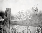Country Chic Prints - The Country Fence in Black and White Print by Lisa Russo