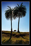 Silhouettes Originals - The Cow and The Palm Trees by Mukesh Srivastava