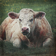 Angela Doelling AD DESIGN Photo and PhotoArt - The cow