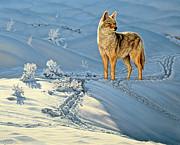 the Coyote - God's Dog Print by Paul Krapf