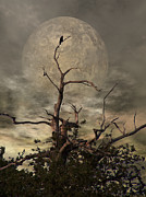 Black Background Mixed Media Acrylic Prints - The Crow Tree Acrylic Print by Abbie Shores