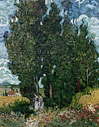 Maids Framed Prints - The cypresses Framed Print by Vincent van Gogh