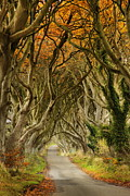 The Dark Hedges Prints - The Dark Hedges 2 Print by Frank  Koenig