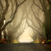 Morning Fog Prints - The Dark Hedges 2011 Print by Pawel Klarecki