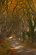 Dark Hedges Prints - The Dark hedges in Autumn Print by Derek Smyth