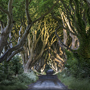 Bregagh Road Prints - The Dark Hedges Print by Jacek  Kadaj