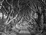 Dark Hedges Posters - The Dark Hedges Poster by Mark Hinds