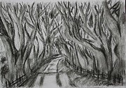 Paul Morgan Metal Prints - The Dark Hedges Metal Print by Paul Morgan