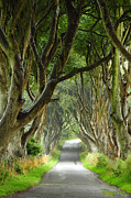 Bregagh Framed Prints - The Dark Hedges Framed Print by Rachel  Slater
