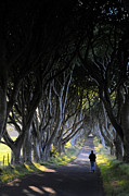 Sharon Sefton - The Dark Hedges