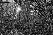 Jamie Pham - The Dark Jungle