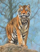 Siberian Tiger Posters - The Dartmoor Tiger Poster by David Stribbling