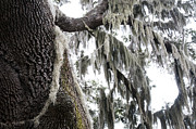 Epiphytic Metal Prints - The Deep South Metal Print by Kenneth Albin