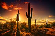 Saija  Lehtonen - The Desert Awakens